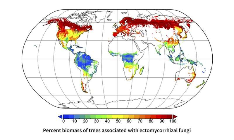 Researchers map symbiotic relationships between trees and ... on