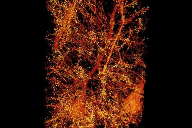 Mapping the brain at high resolution