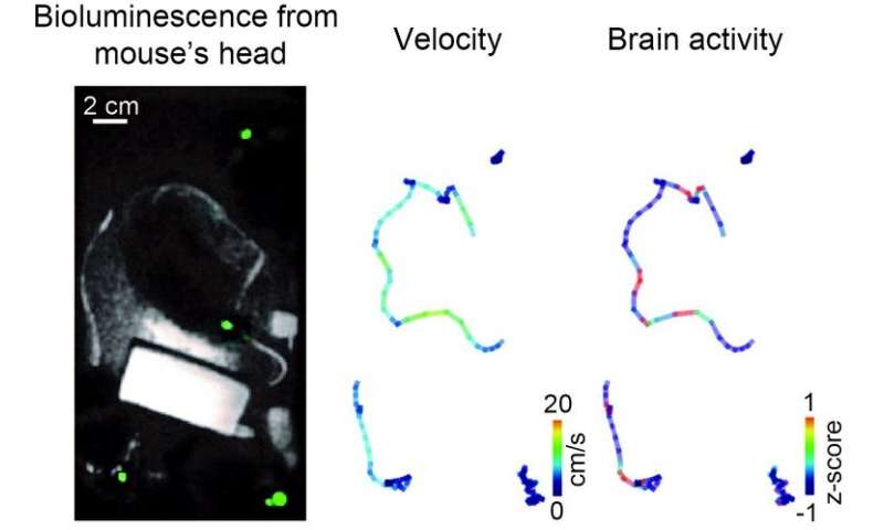Measuring brain activity associated with social behavior in mice