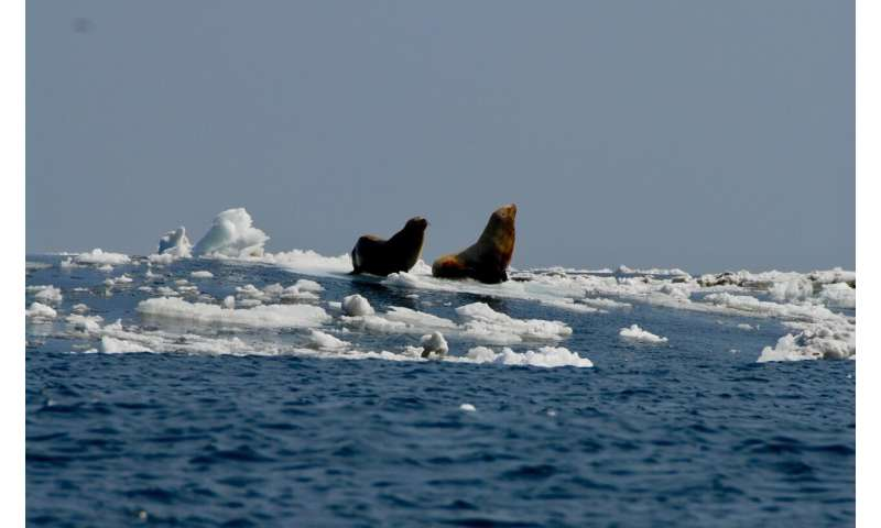 Melting arctic sea ice linked to emergence of deadly virus in marine mammals