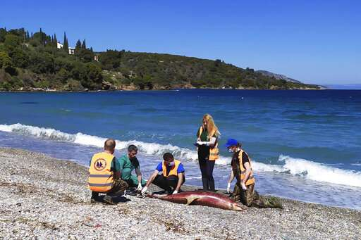 More dolphins die in Aegean Sea; group suspects navy drills