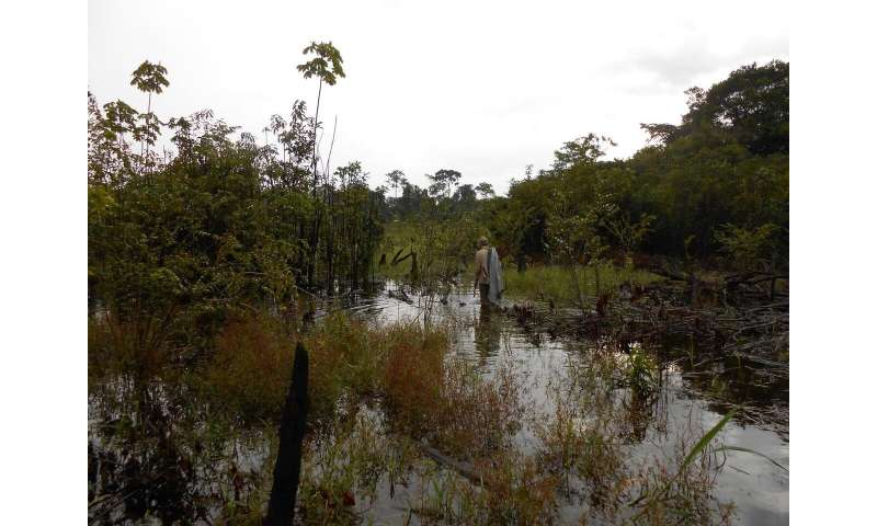 More farmers, more problems: How smallholder agriculture is threatening the western Amazon