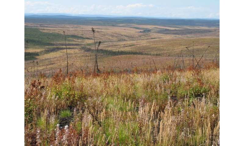 More frequent fires could dramatically alter boreal forests and emit more carbon