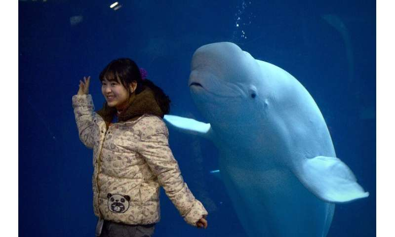 More than 3,000 whales and dolphins are kept in captivity around the world