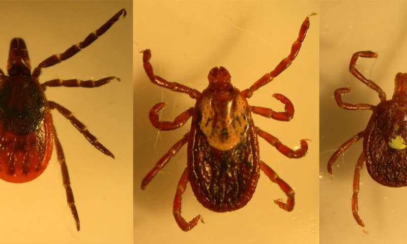 More than lyme: Tick study finds multiple agents of tick-borne diseases