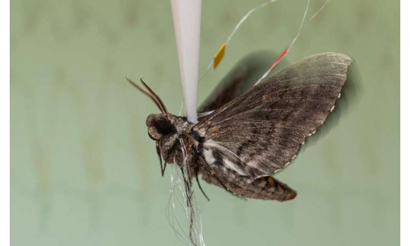 Moths and perhaps other animals rely on precise timing of neural spikes