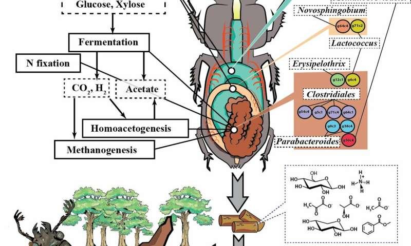 Nature's own biorefinery