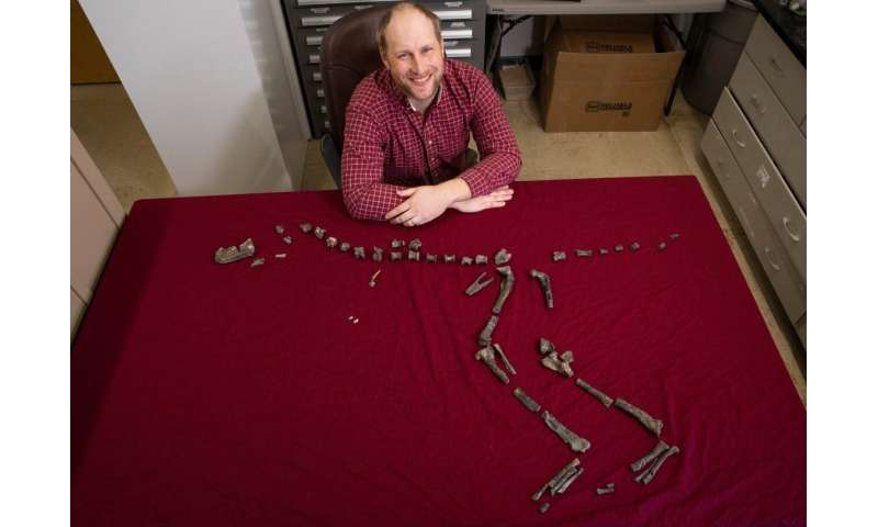 New 3-foot-tall relative of Tyrannosaurus rex