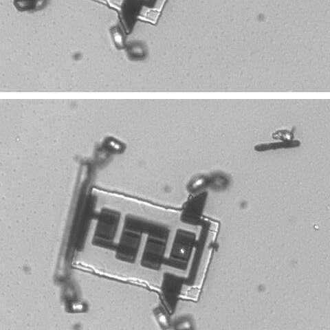 New cell-sized micro robots might make incredible journeys