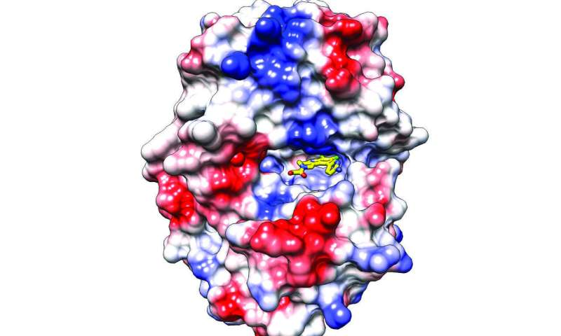 New compounds could be used to treat autoimmune disorders