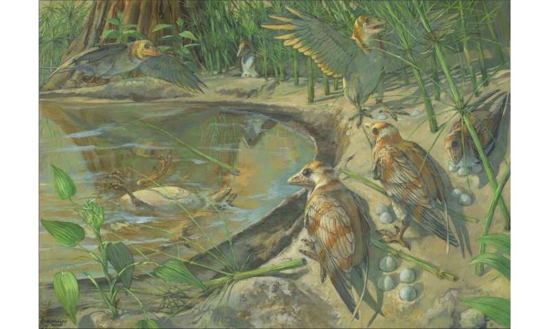 New Cretaceous fossil sheds light on avian reproduction