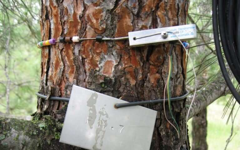 New forest treatment helps trees adapt better to climatic change