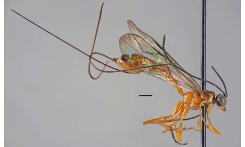 New large-sized insect species discovered in tropical forest