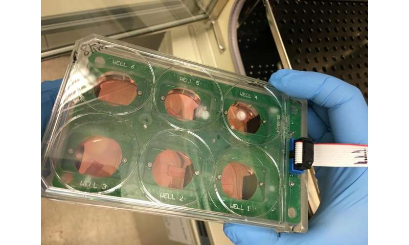 New method enables more extensive preclinical testing of heart drugs and therapies