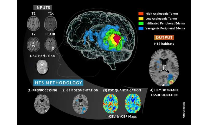 New methodology developed at UPV to monitor patients with glioblastoma