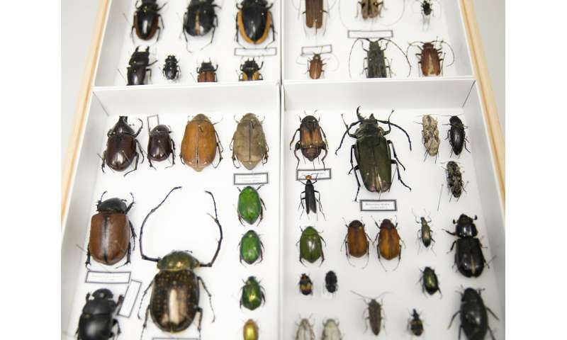 New research project on the impact of extreme weather on biodiversity and pollinating insects