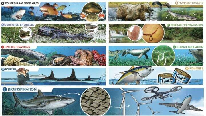 New study explores impacts of marine and freshwater predators on ecosystems and society