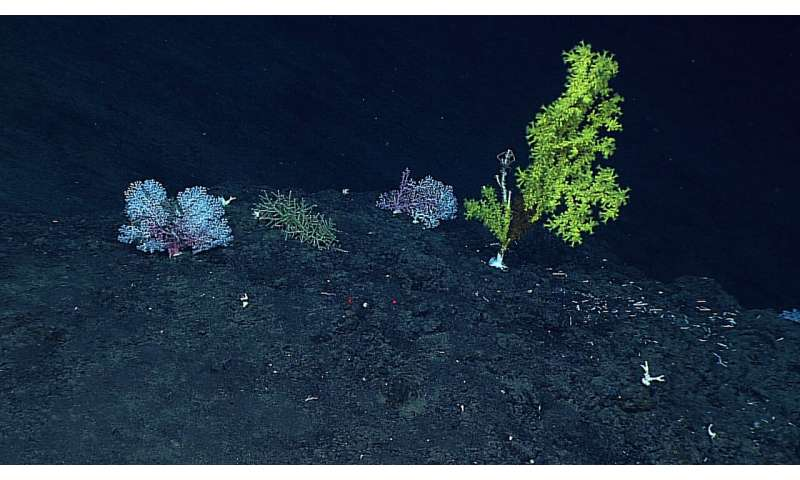 New study first to reveal growth rates of deep-sea coral communities