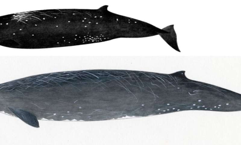 New whale species discovered along the coast of Hokkaido