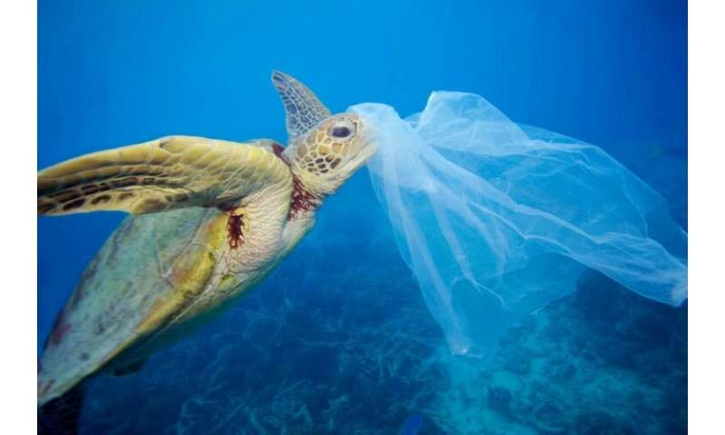 Nordic countries call for global treaty on ocean plastic pollution