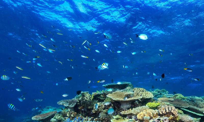 No silver bullet for helping the Great Barrier Reef