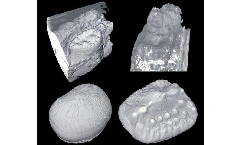 No teeth cleaning needed: Crocodiles shed old teeth, grow new ones