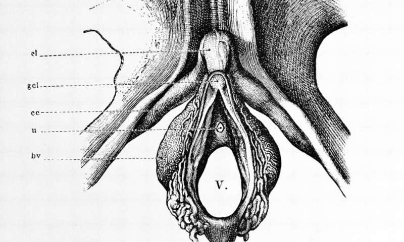 Oh, oh, oh! The clitoris certainly gives pleasure. But does it also help women conceive?