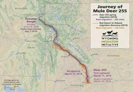 One deer's journey: An epic migration is revealed in new maps