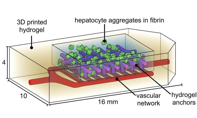 Organ bioprinting gets a breath of fresh air