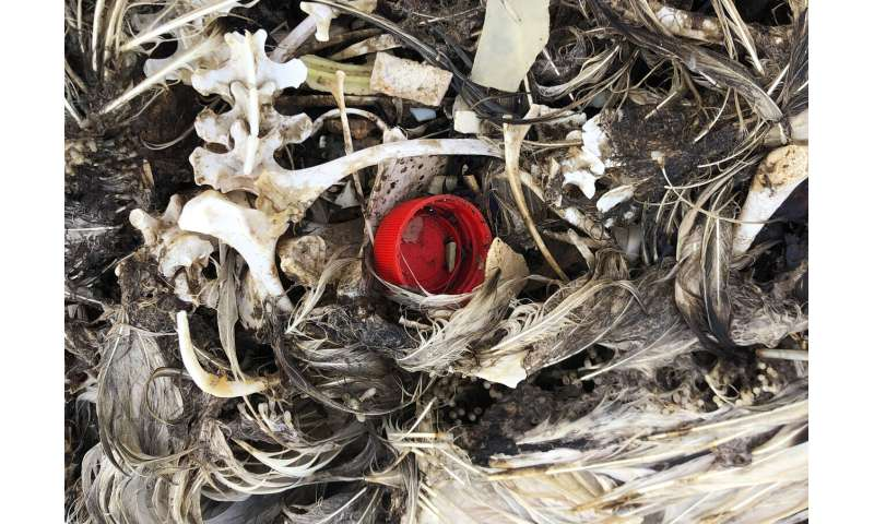 Pacific bird refuge struggles as ocean garbage patch grows