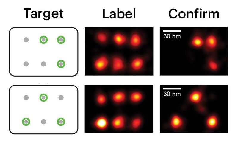 Painting the molecular canvas in super-resolution
