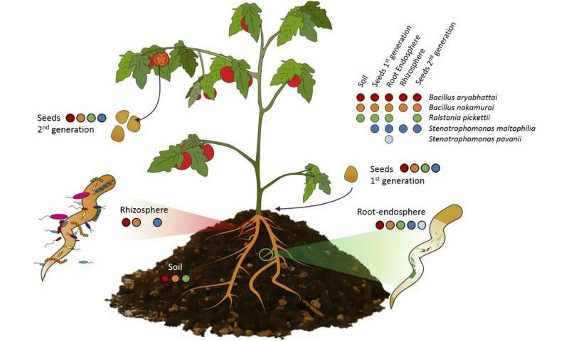 Plant seed research provides basis for sustainable alternatives to chemical fertilizers