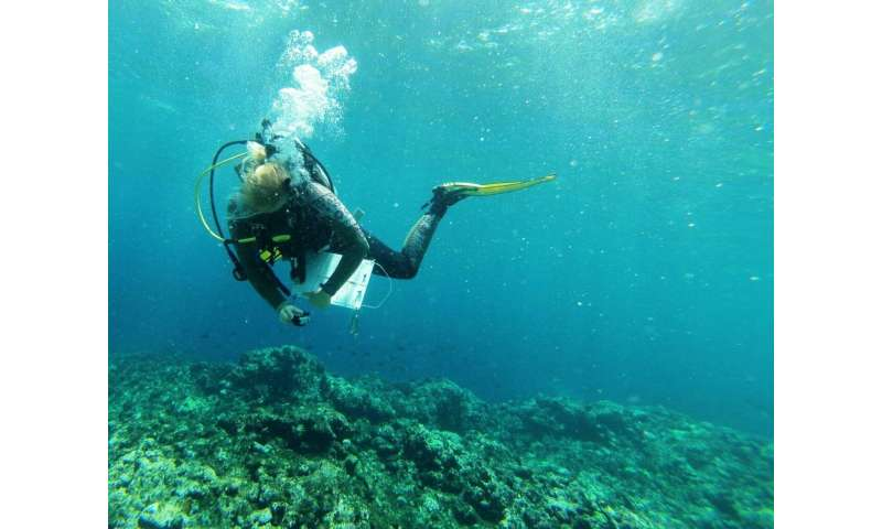 Proximity to land determines how coral reef communities respond to climate change events