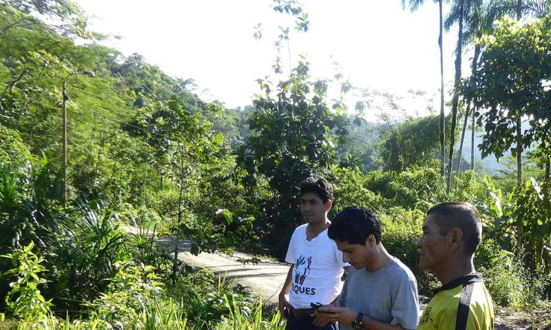 Rainforest conservation in Peru must become more effective
