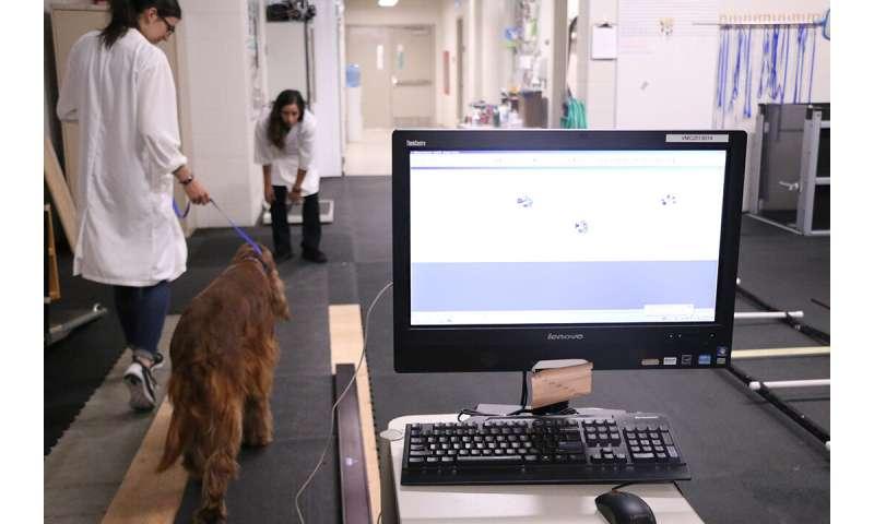 Ramp walking helps diagnose lameness in dogs
