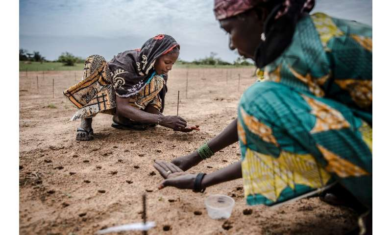 Reforestation efforts, like this one in Niger, can only be one part of the solution