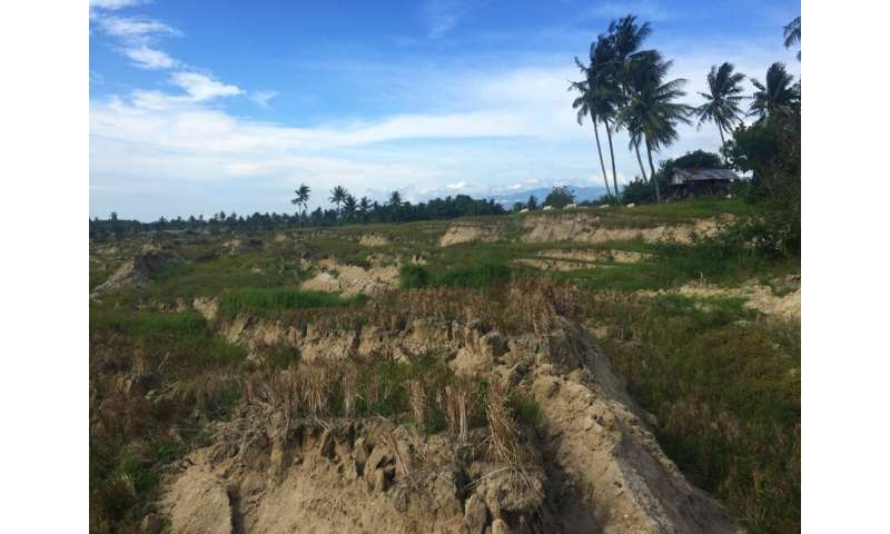 Rice irrigation worsened landslides in deadliest earthquake of 2018, study finds