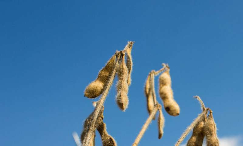 Rising temperatures may safeguard crop nutrition as climate changes