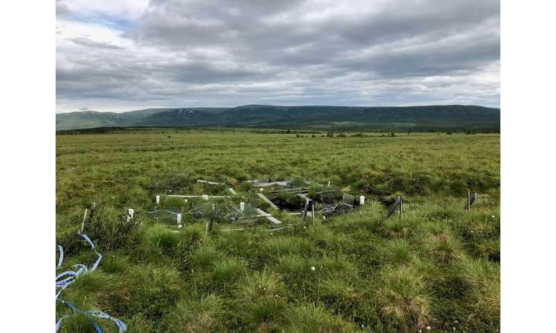 Rising tundra temperatures create worrying changes in microbial communities