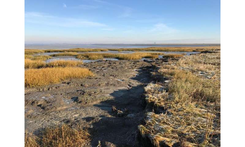 Sea level rise requires extra management to maintain salt marshes