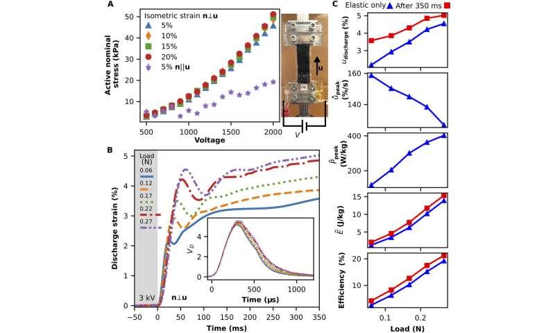 Shape-programmable dielectric liquid crystal elastomer actuators
