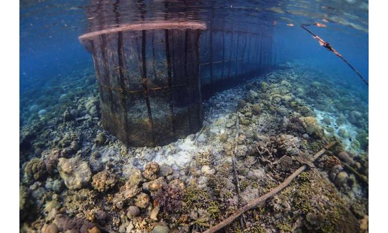 Small-scale fisheries have unintended consequences on tropical marine ecosystems