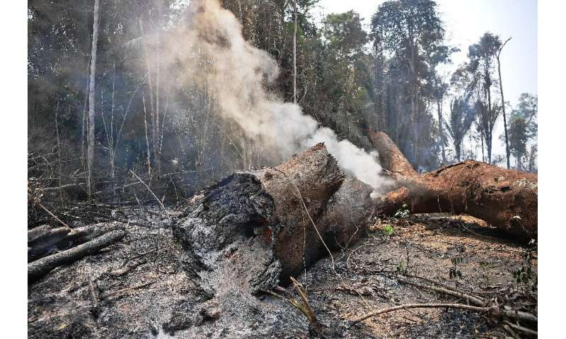 Smoke billows from a burning tree trunk near Porto Velho, in the Brazilian Amazon basin state of Rondonia