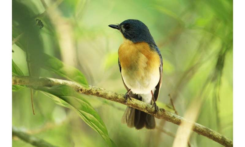 How neuronal recognition of songbird calls unfolds over time