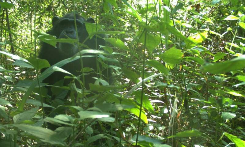 South Sudan: Latest images reveal a global hotspot for biodiversity
