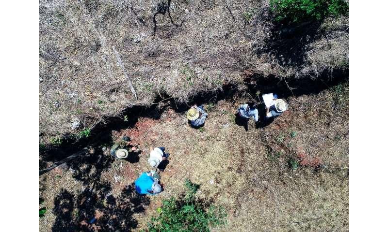 State University of Maringa paleontologists work at the site where fossilised bones of a dinosaur were found in Maringa, Parana