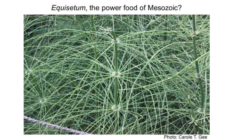 Superfood for Mesozoic herbivores? Emerging data on extreme digestibility of equisetum and implications for young, growing herbi