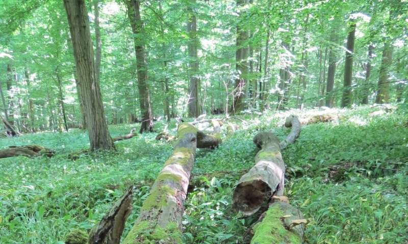 Talking to each other -- how forest conservation can succeed