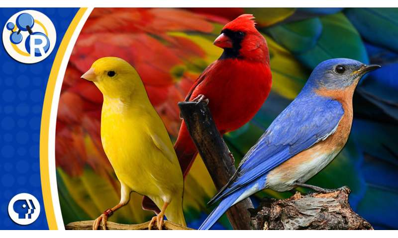 The Chemistry Behind Color Changing Birds Video