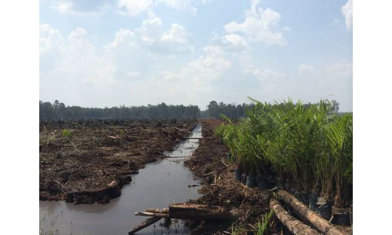 The human cost of palm oil development